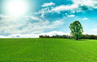 Бесплатные фото поле,трава,деревья,небо,пейзаж