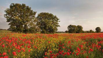 Заставки поле, трава, цветы, деревья, кустарник, небо