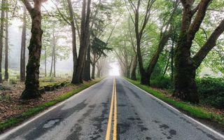 Бесплатные фото лес, деревья, дорога, туман, пейзаж