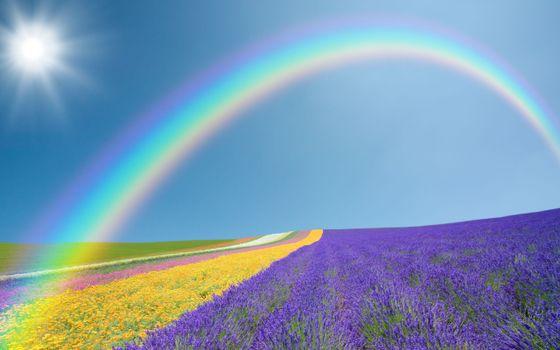 Бесплатные фото поле,цветы,цветные,радуга,небо,солнце