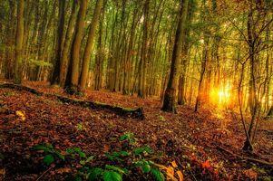 Фото бесплатно закат, лес, деревья