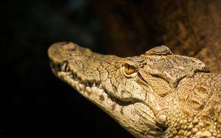 Бесплатные фото крокодил, морда, пасть, глаза, рептилии