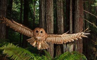 Фото бесплатно сова, морда, клюв