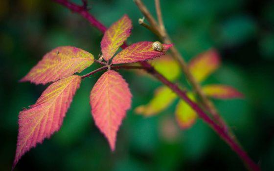 Фото бесплатно улитка на листе, веточка, литья, листок, улитка