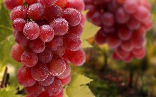 Бесплатные фото виноград,грозди,ягода,капли,вода,листья