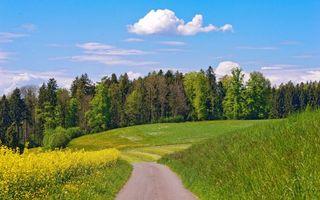 Фото бесплатно дорога, поля, трава