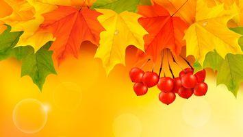 Фото бесплатно кленовые листья, рябина, осень