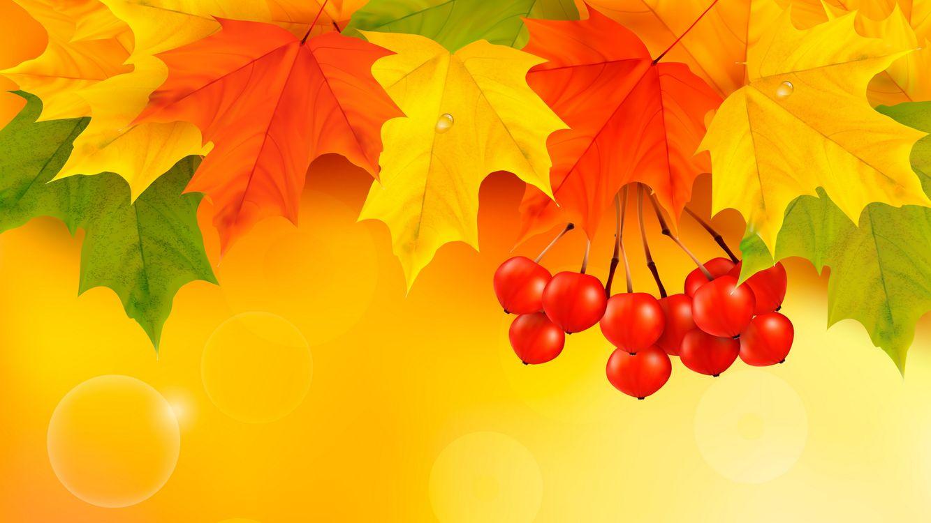 Фото бесплатно кленовые листья, рябина, осень - на рабочий стол