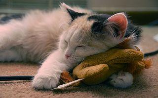 Бесплатные фото котенок,пушистый,морда,лапы,спит,игрушка