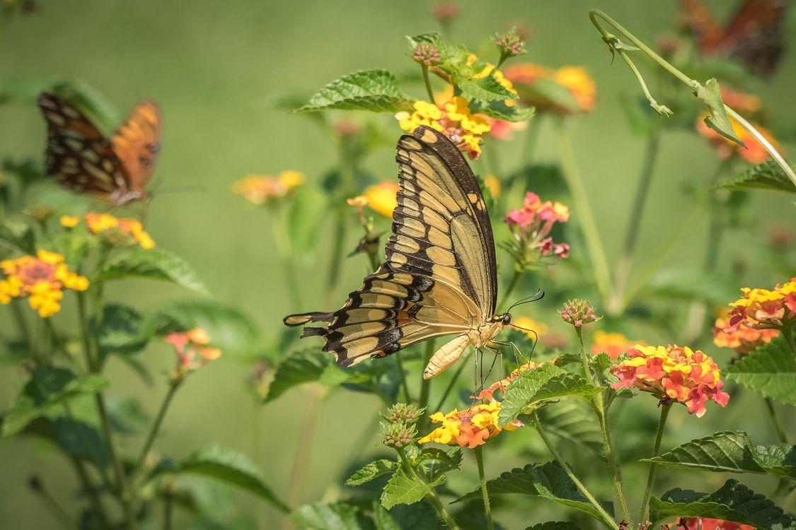Фото бесплатно бабочка, цветок, цветы - на рабочий стол