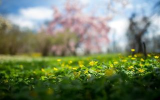 Фото бесплатно цветы, лето, поляна