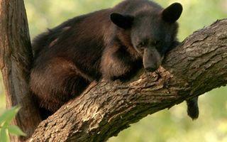 Бесплатные фото медведь,бурый,морда,шерсть,дерево,ствол