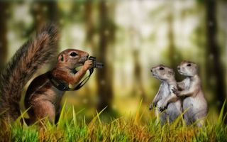 Бесплатные фото животные,суслики,белка,фотографируются,трава,лес