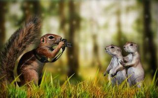 Фото бесплатно животные, суслики, белка