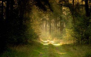 Бесплатные фото лес,деревья,кустарник,трава,дорога,солнце,лучи