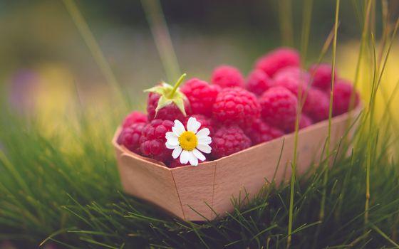 Фото бесплатно ягода, малина, ромашка