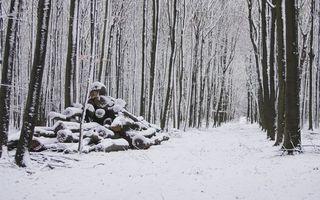 Бесплатные фото зима,лес,деревья,бревна,снег,дорога