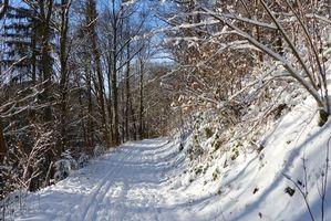 Заставки зима, лес, дорога, деревья, пейзаж