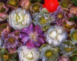 Фото бесплатно розы, фон, цветы