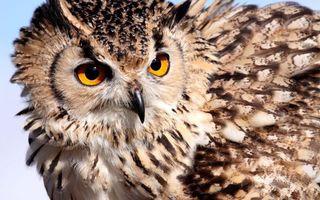 Фото бесплатно сова, хищник, взгляд