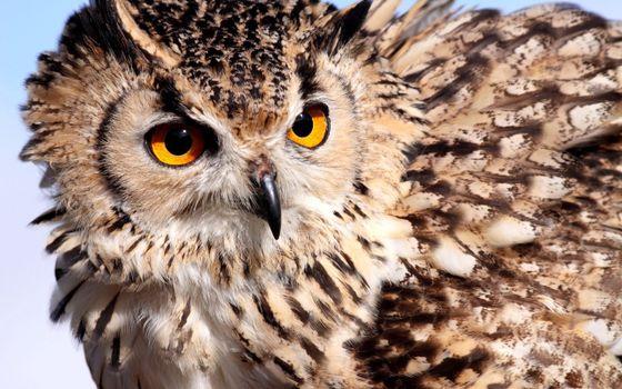 Бесплатные фото сова,хищник,взгляд,полет