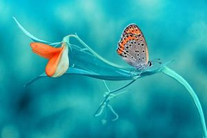Фото бесплатно цветок, бабочка, макро