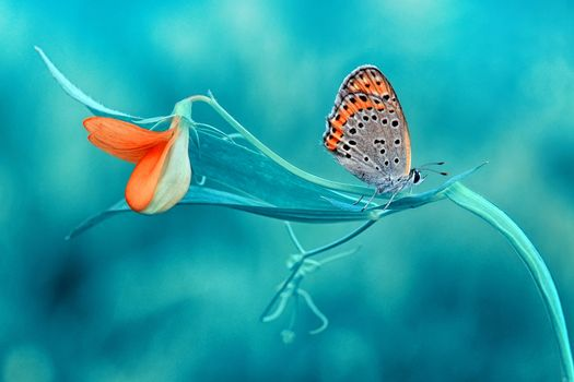 Pictures on a flower, butterfly