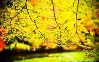 Заставки листья, осень, деревья, желтый
