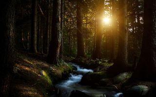 Бесплатные фото ручей,течение,камни,деревья,лес,солнце