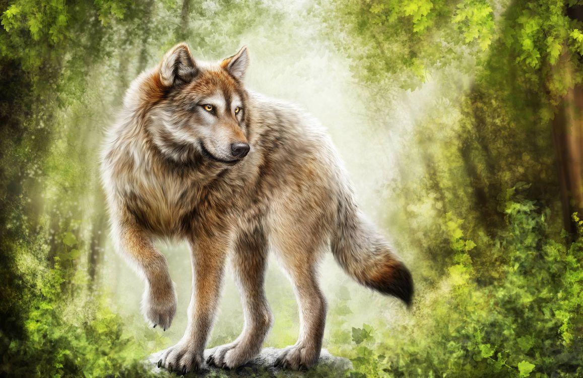 Фото бесплатно волк, хищник, art, рендеринг