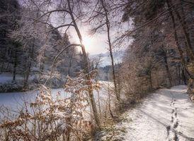 Бесплатные фото зима,река,дорога,лес,деревья,пейзаж