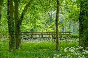 Бесплатные фото лес, деревья, парк, мост, природа, пейзаж