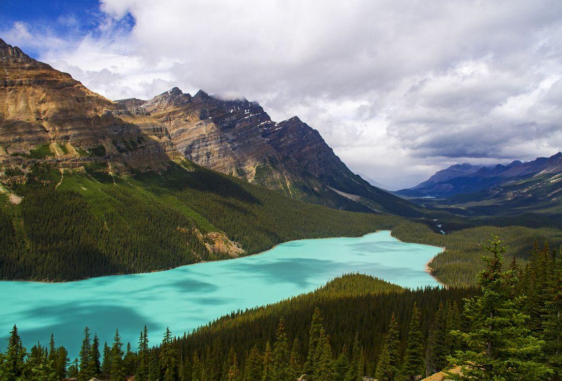Фото бесплатно Озеро Пейто, Канада, горы, лес, деревья, пейзаж, пейзажи