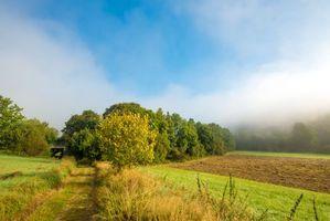 Бесплатные фото поле,дорога,мост,деревья,туман,пейзаж,осень