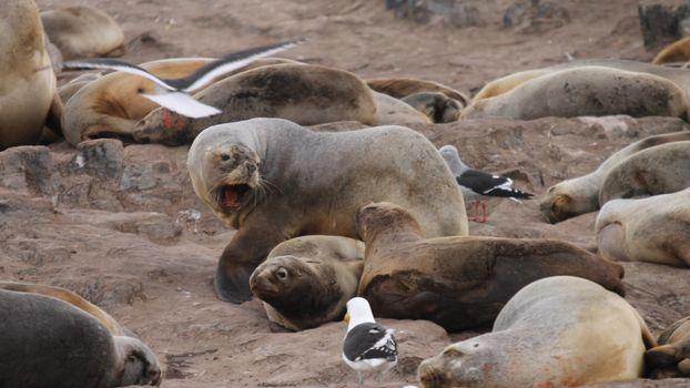 Фото бесплатно берег, лежбище, тюлени, туши, птицы, чайки