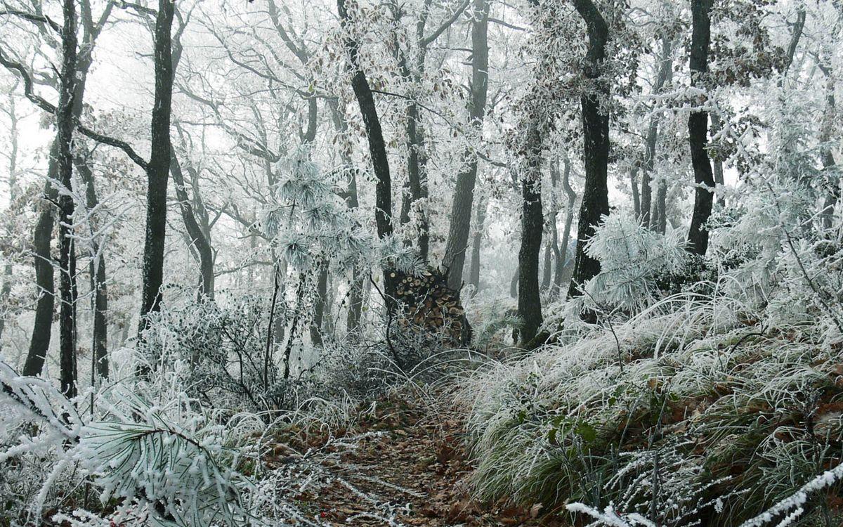 Фото бесплатно лес, деревья, трава, мороз, иней, природа