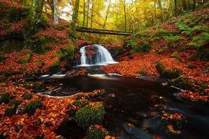 Бесплатные фото осень, водопад, лес, деревья, природа