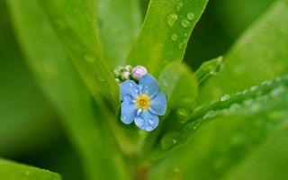 Фото бесплатно цветочек, лепестки, листья
