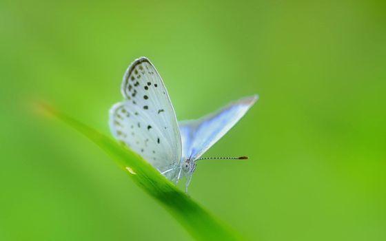 Фото бесплатно бабочка, трава, ноги
