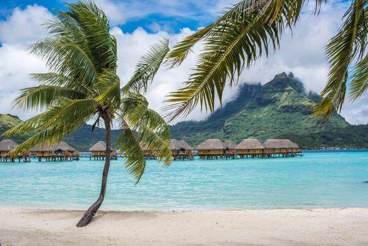 Photo free Bora Bora, sea, palm trees