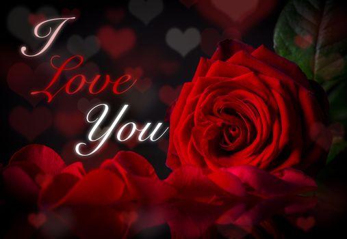 Download screensaver valentine`s day, valentine`s day