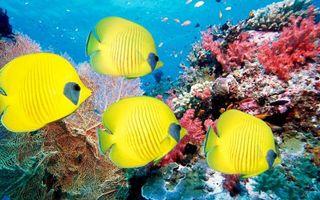 Бесплатные фото желтые рыбы,кораллы,океан