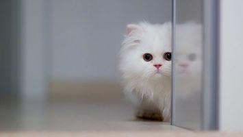Бесплатные фото котенок,белый,пушистый,морда,шерсть,стекло,отражение