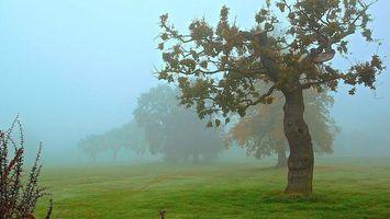 Фото бесплатно кустарник, трава, зеленая