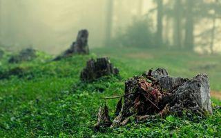 Бесплатные фото лес,трава,зеленая,пеньки,листья,сухие,туман