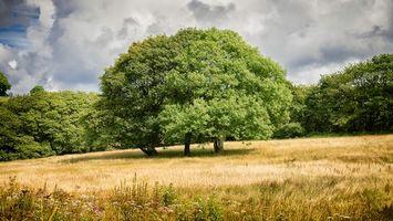 Фото бесплатно поле, деревья, тучи