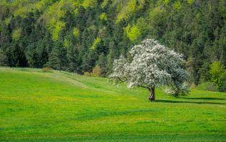 Бесплатные фото поле, лес, деревья, пейзаж