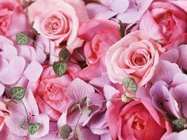 Фото бесплатно розы, букет, розовый