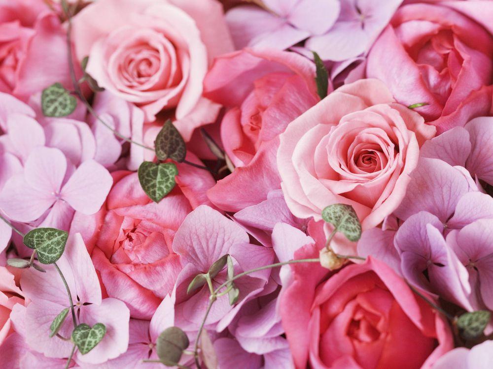 Фото бесплатно розы, букет, розовый, сиреневый, нежность, цветы
