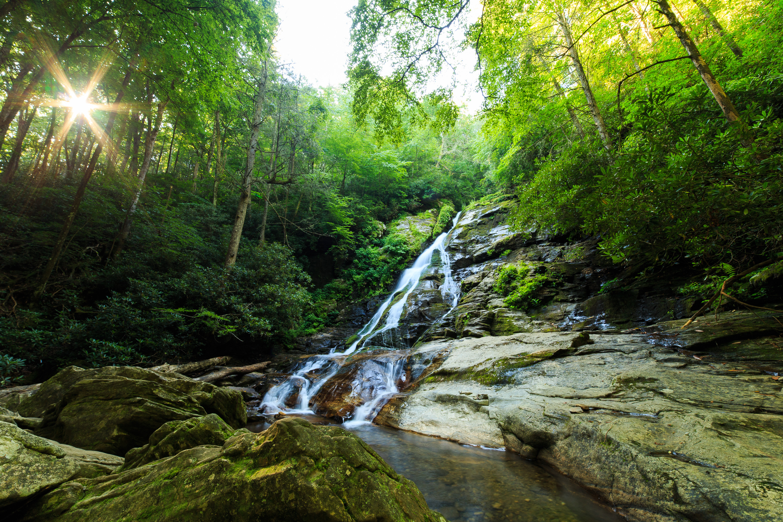 обои лес, деревья, водопад, скалы картинки фото